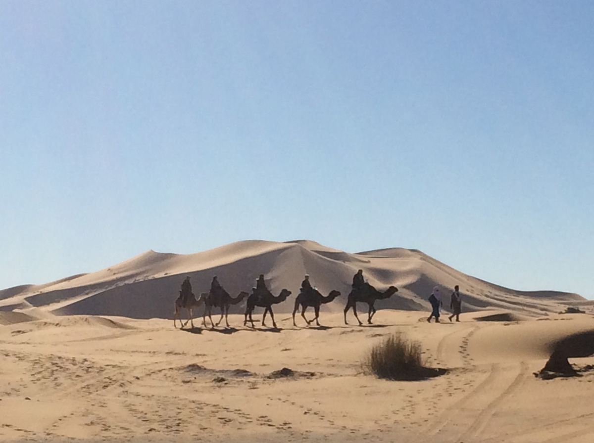 Camels near Merzouga